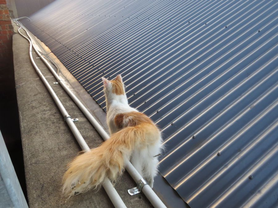 cat on tin roof
