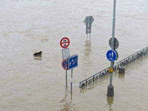 flood24